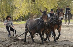 Hell on Wheels  Episode 3.10 (Season Finale): Get Behind the Mule