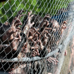 The Walking Dead Review: Internment (It's Bad. It's Really Bad)